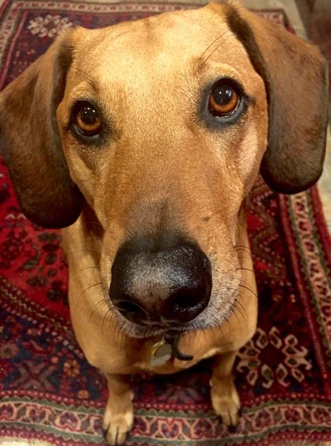 Fairhope Dogs - Doug Tarabella