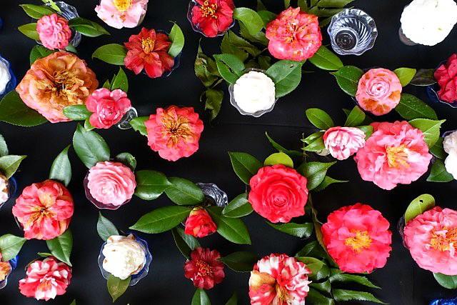 Festival of Flowers 2016- Leslie Anne Tarabella
