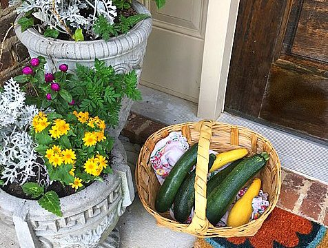 Zucchini: the gift that keeps on giving