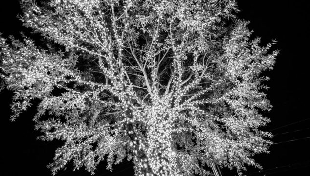 Lighting of the Trees 2016  . . . ahhhhh.